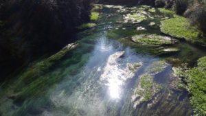 Blue Springs 08